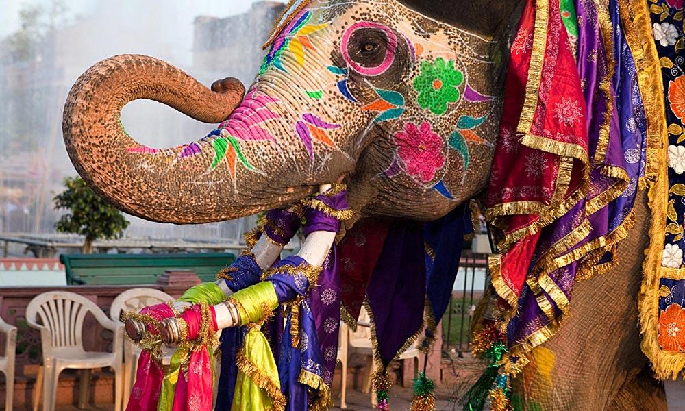 Jaipur Elephant Festival, Rajasthan