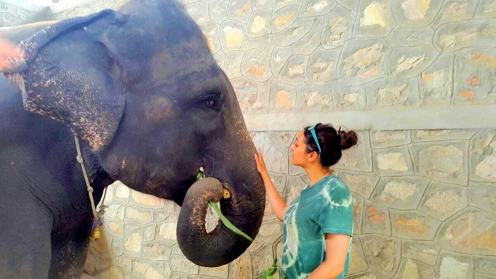 volunteer with elephants in india